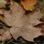 """Autumn Dew"" by michaelg"