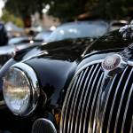 """The Jaguar"" by wingsdomain"
