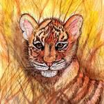 """Tiger Cub"" by ChrisCrowley"