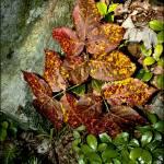 """Leaves Like Fire"" by norablansett"