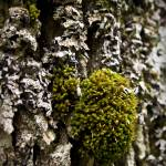 """Little Green Lichen"" by norablansett"