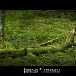 """""""Loch Ness in Bell Park!"""" by norablansett"""