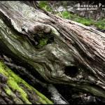 """The Scream!"" by norablansett"