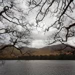 """Bare Branches Reach Out"" by tomharrisonphotography"