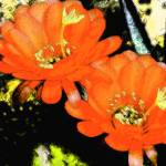 """ORANGE FLOWERS 2"" by AES"