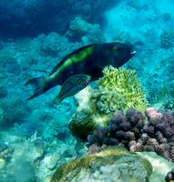 parrot and wrasse