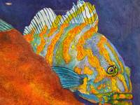 Orange & Blue fish