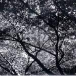 """""""Trees"""" by JeMappelleKel"""