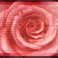 Rose rosa Zentrum Art Prints & Posters by Ulrich Weidmann