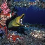 """Green Moray Eel"" by jdduff"