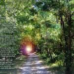 """Road Not Taken"" by heavenlyimages"