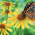 """Baltimore Checkerspot & Blackeyed Susan"" by SamanthasArtStudio"