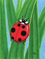 The Happy Ladybug