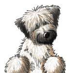 """Soft Coated Wheaten Terrier"" by KiniArt"