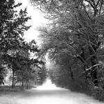 """Spring in Minnesota"" by WaynePhotoGuy"