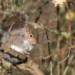 """""""Squirrel"""" by dutts303"""