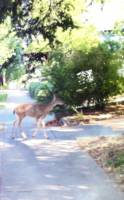 Deer on Walk
