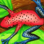 """Strawberry Dart Frog"" by SamanthasArtStudio"