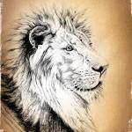 """African Lion"" by Tamixes"