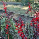 """""""Red- Orange Flowers"""" by venetiakelley"""