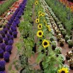 """""""Flowers In Portland"""