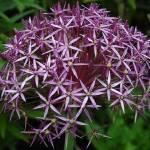 """""""Little Purple Flowers Boquet"""" by venetiakelley"""