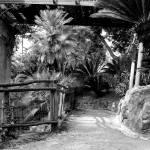 """""""Parco di Villa Rocca"""" by harbinger"""