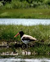 Salt Marsh_PhotoContest-TNC09