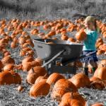 """""""Pumpkin Magic"""" by Mylene"""