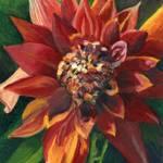 """Red Dahlia"" by ACastelli"