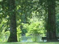 A bench by the river by the trees