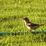 """""""Bird"""" by dinatemraz"""