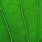 """Leaf"" by dinatemraz"