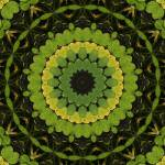 """Lily Pad Kaleidoscope"" by lyle58"