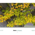 """America Beech tree"" by BlackStonePhotographyWV"