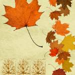 """Maple Leaf"" by Pederbeck"