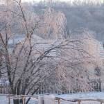 """""""Icetree"""" by earn"""