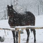 """snowhorse"" by earn"