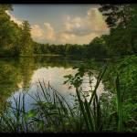"""Hidden Pond"" by Kellgallaher"