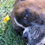 """""""cute dog"""" by georgieboy"""