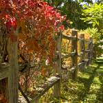 """Wooden Fence Autumn Foliage"" by FallingSilver"