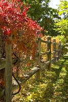 Wooden Fence Autumn Foliage