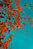 Autumn afternoon_0056_edited-10