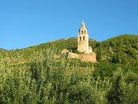 Olive trees and church
