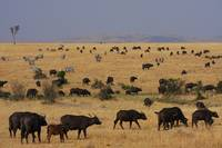 Masai Mara wildlife