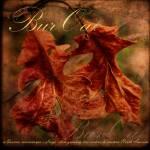 """""""Bur Oak"""" by aquilaart"""