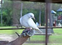 How about a peace dove?