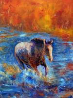 Horse Running through River