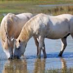 """White Horses"" by lebanmax"