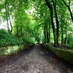 """Leafy Lane"" by rwbthatisme"